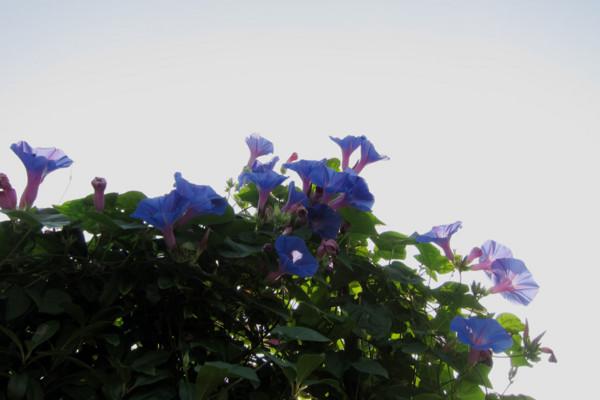 f:id:misaki-taku:20100905124936j:image