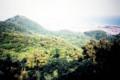 湘南平から高麗山 古い写真