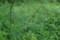 広町の森 若木