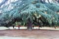 新宿御苑大樹の下