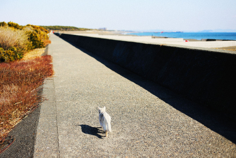f:id:misaki-taku:20150310221216j:image