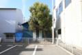 駐車場と木