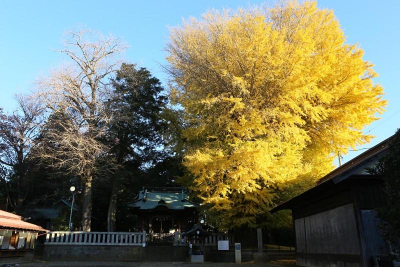 f:id:misaki-taku:20161210201306j:image