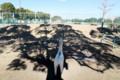 木の影ほか