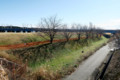 河川敷の並木