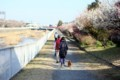 川沿いの道
