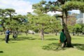 千代田の松