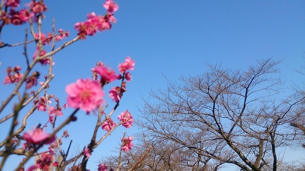 f:id:misaki_hoshino:20180305010544j:plain