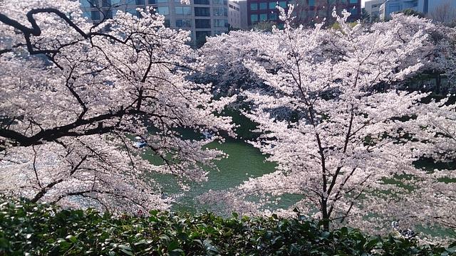 f:id:misaki_hoshino:20180407003959j:plain