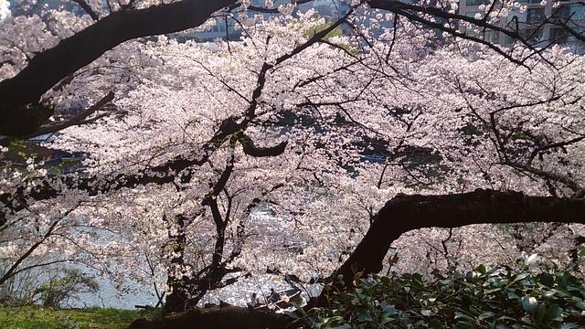 f:id:misaki_hoshino:20180407004026j:plain