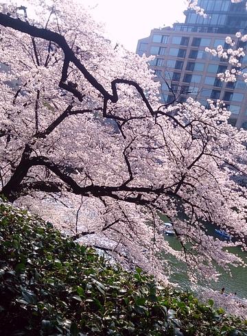 f:id:misaki_hoshino:20180407004147j:plain
