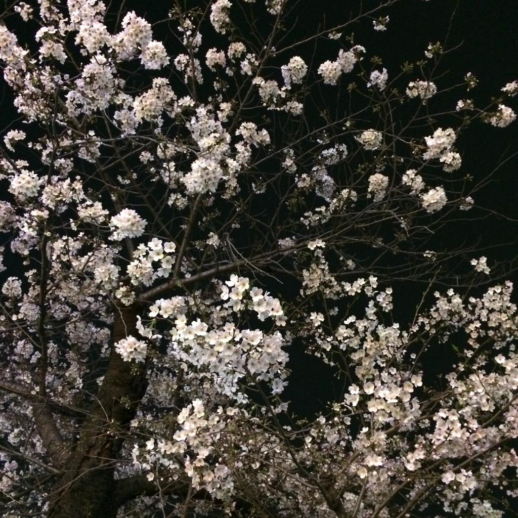 f:id:misaki_miz1nko:20170405223038j:plain