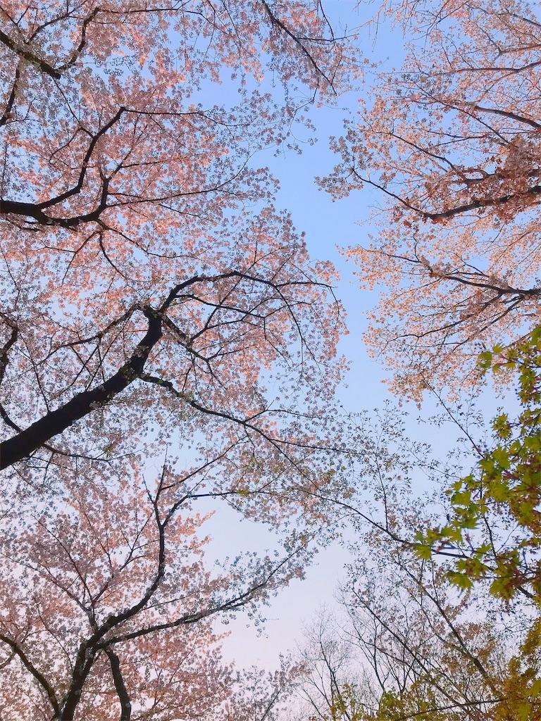 f:id:misakikohama:20190408210003j:image