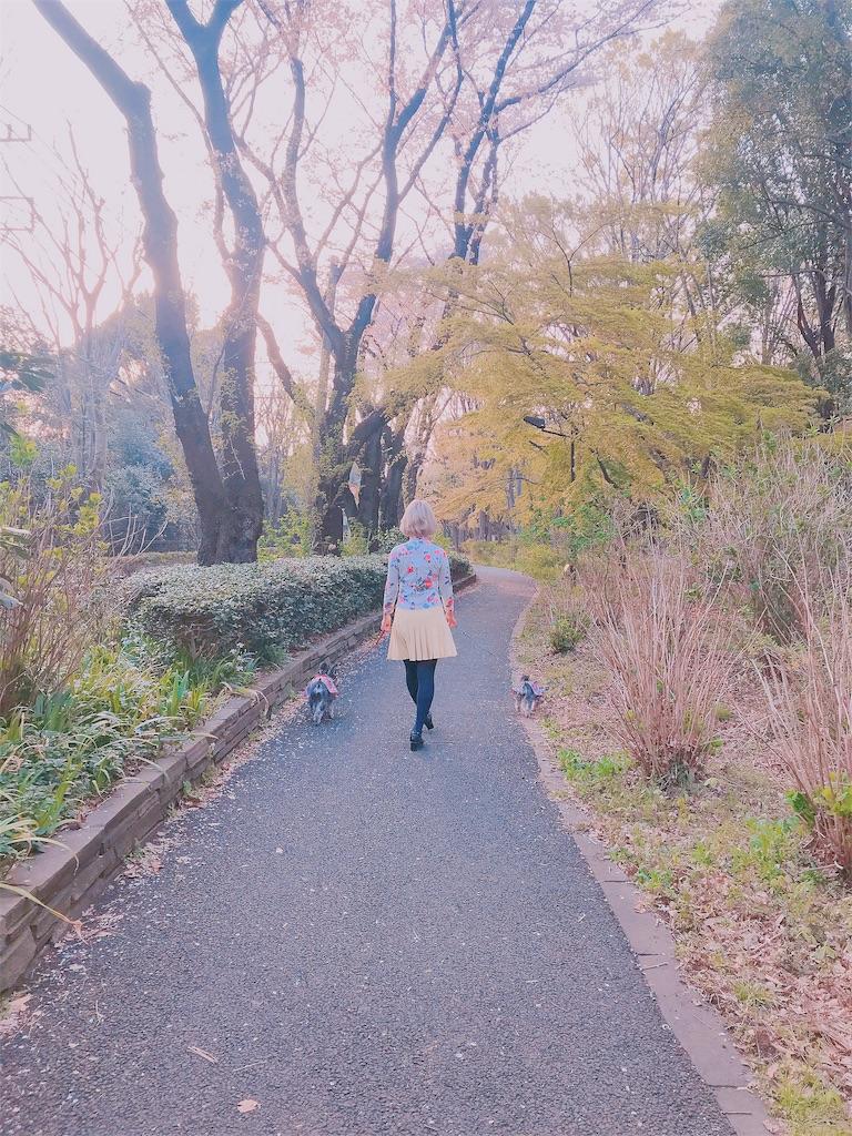 f:id:misakikohama:20190408210032j:image