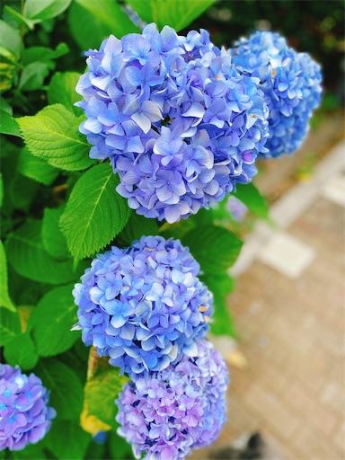 f:id:misakikohama:20200622193942j:image