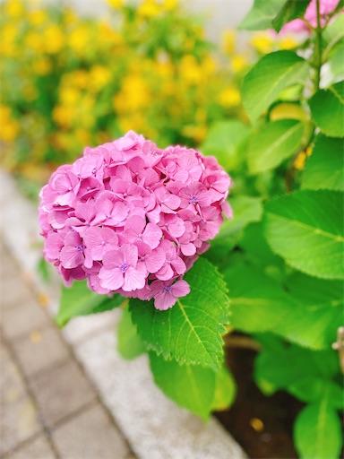 f:id:misakikohama:20200622194005j:image