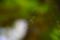 庭のジョロウグモ1号