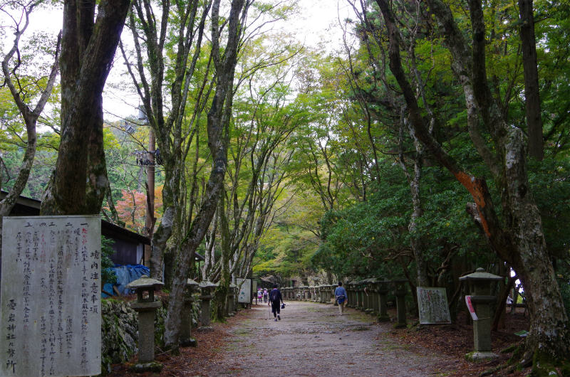 f:id:misato_mikan:20161112235820j:plain