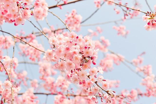 f:id:misatohayashi:20120723225136j:plain