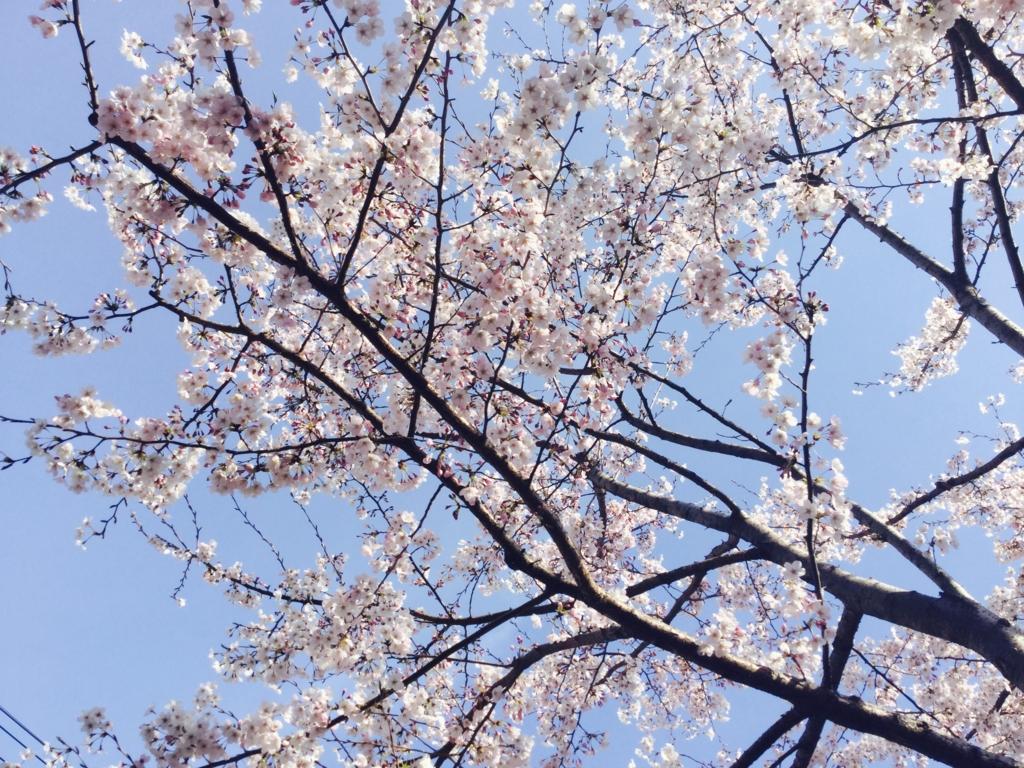 f:id:misatohayashi:20170406081816j:plain