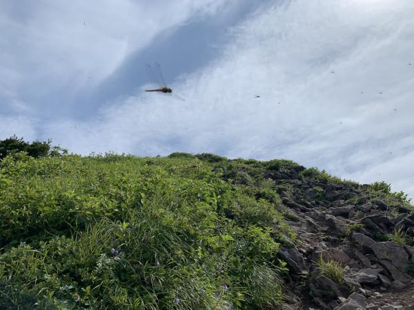 磐梯山トンボ