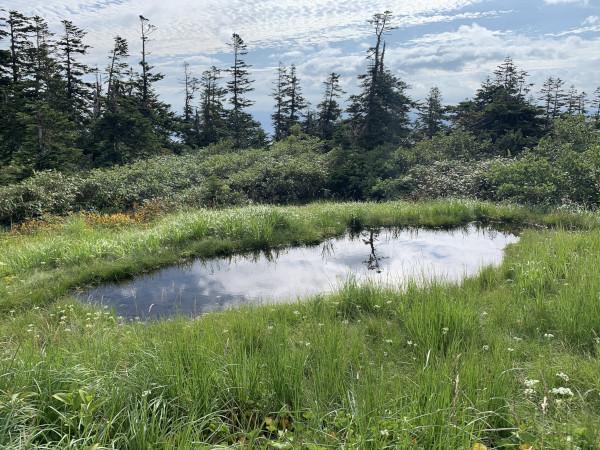 三岩岳 湿地