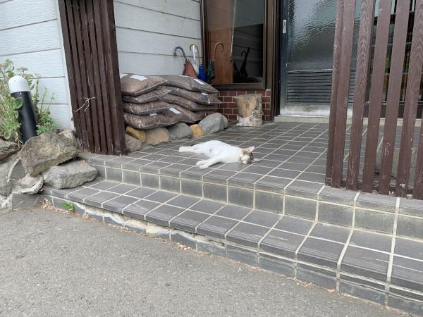 旭日之湯 玄関の猫