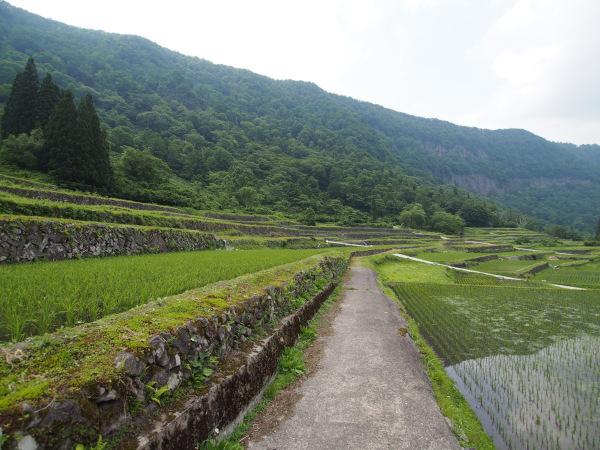 結東の石垣田