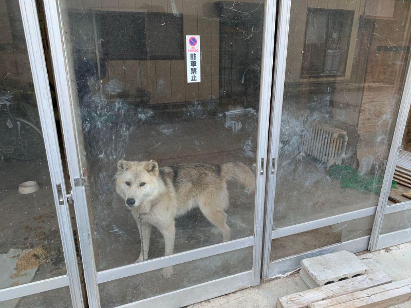 赤倉温泉 犬