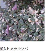 f:id:misawahome:20181015175515j:plain