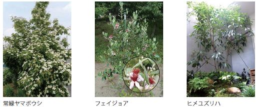 f:id:misawahome:20181015181515j:plain