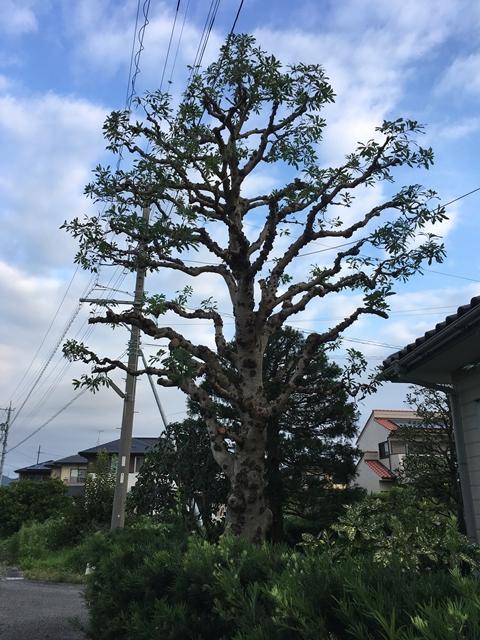 f:id:mishimasaiko:20170818153846j:plain