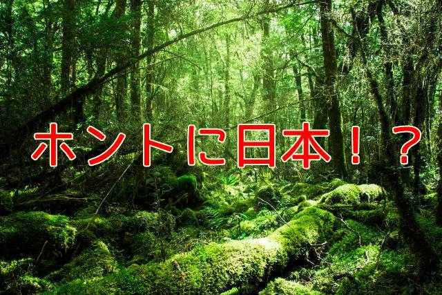 f:id:mishimasaiko:20180829132244j:plain