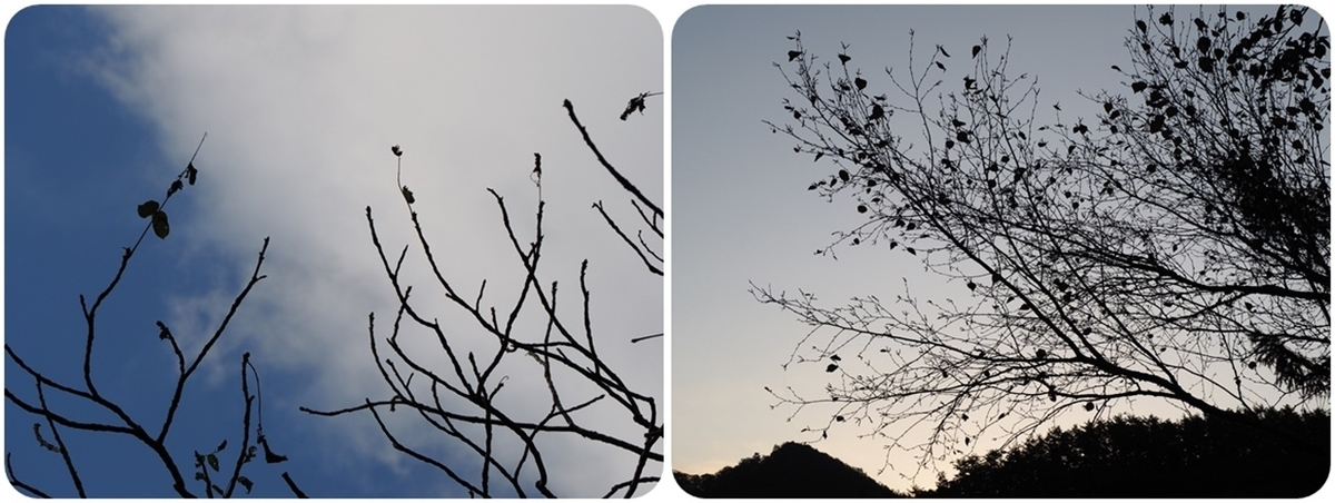 f:id:mishimasaiko:20191113151627j:plain