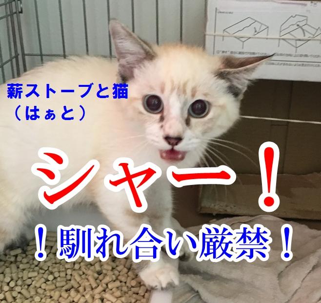 f:id:mishimasaiko:20200819125113j:plain