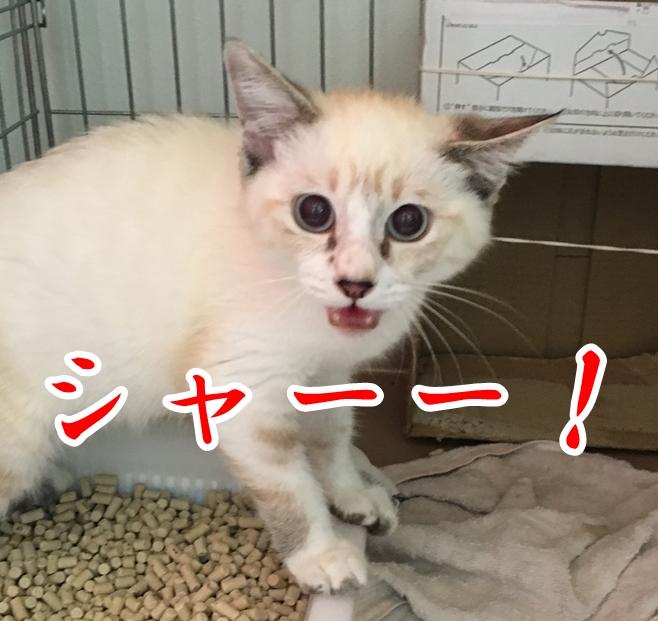 f:id:mishimasaiko:20200819125517j:plain