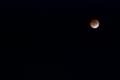 [習作][月蝕]
