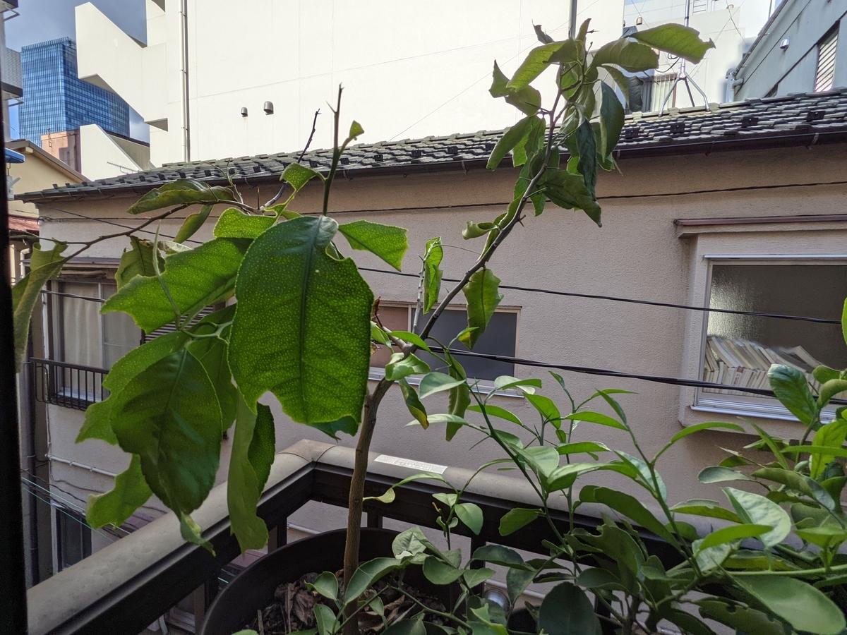 f:id:mishou-club:20210724190145j:plain