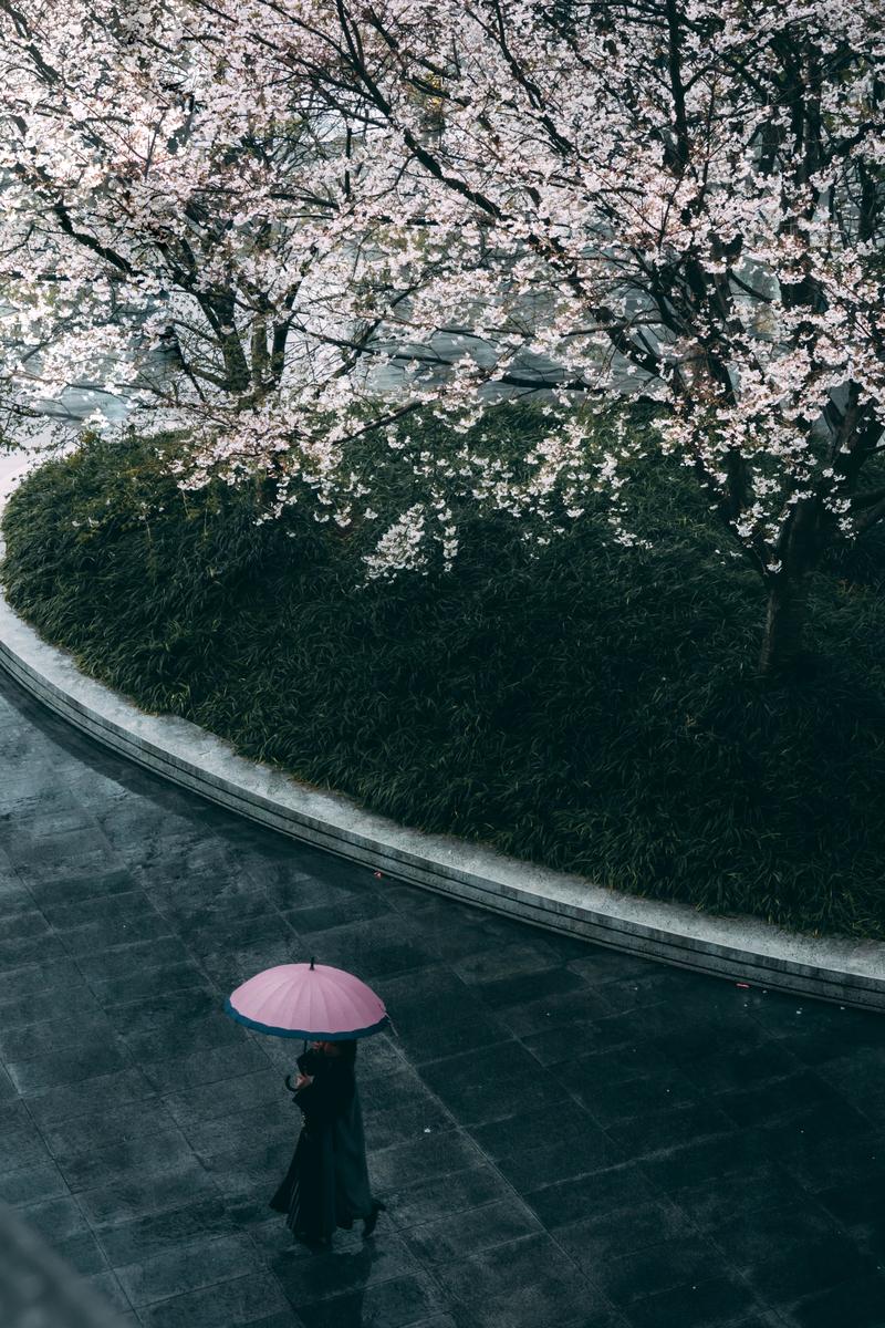 写真:グランフロント付近の桜とピンクの傘の人
