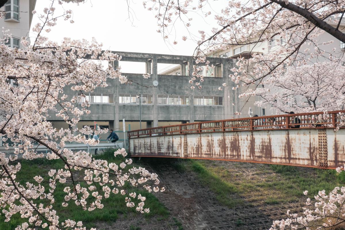 写真:奈良・佐保川沿いの学校と桜