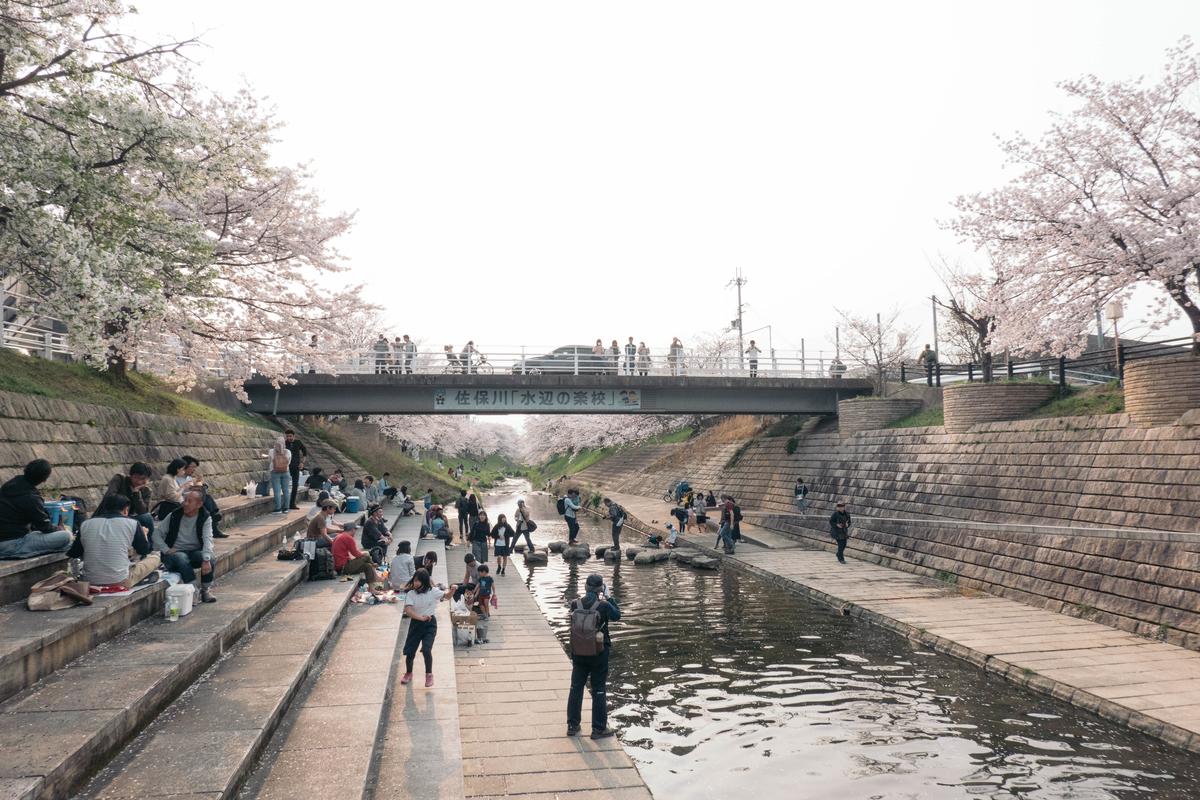 写真:奈良・佐保川の桜と川