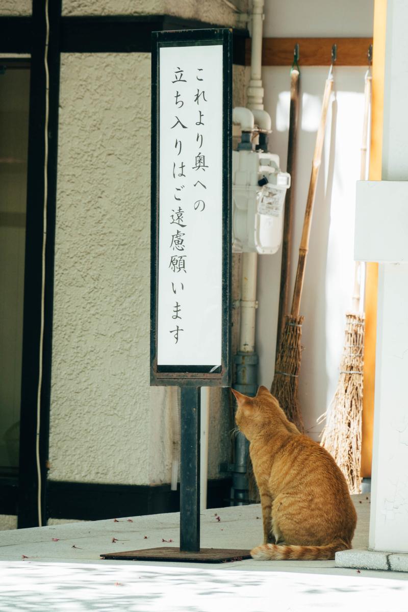 写真:神社にいた猫