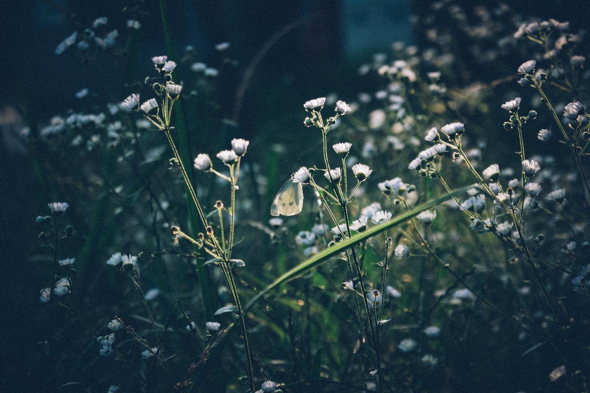 写真:花の蜜を吸う蝶々
