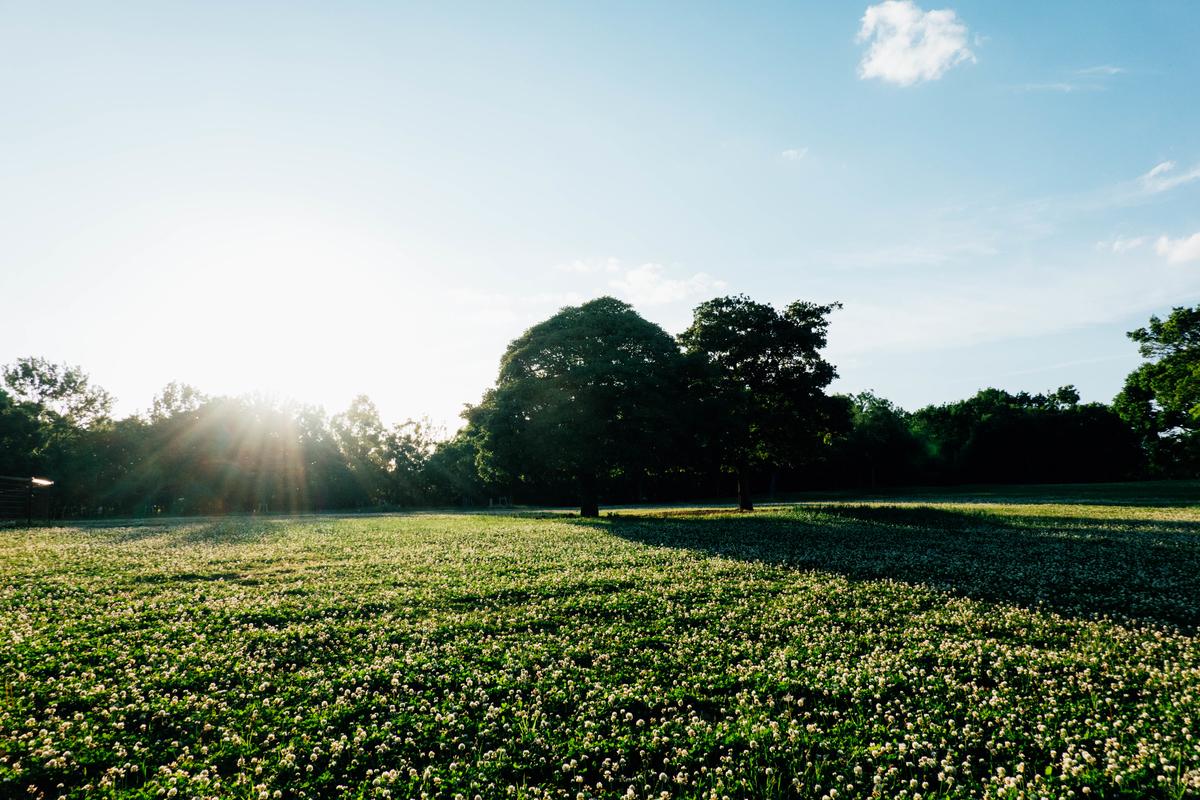 写真:鶴見緑地公園の芝生広場