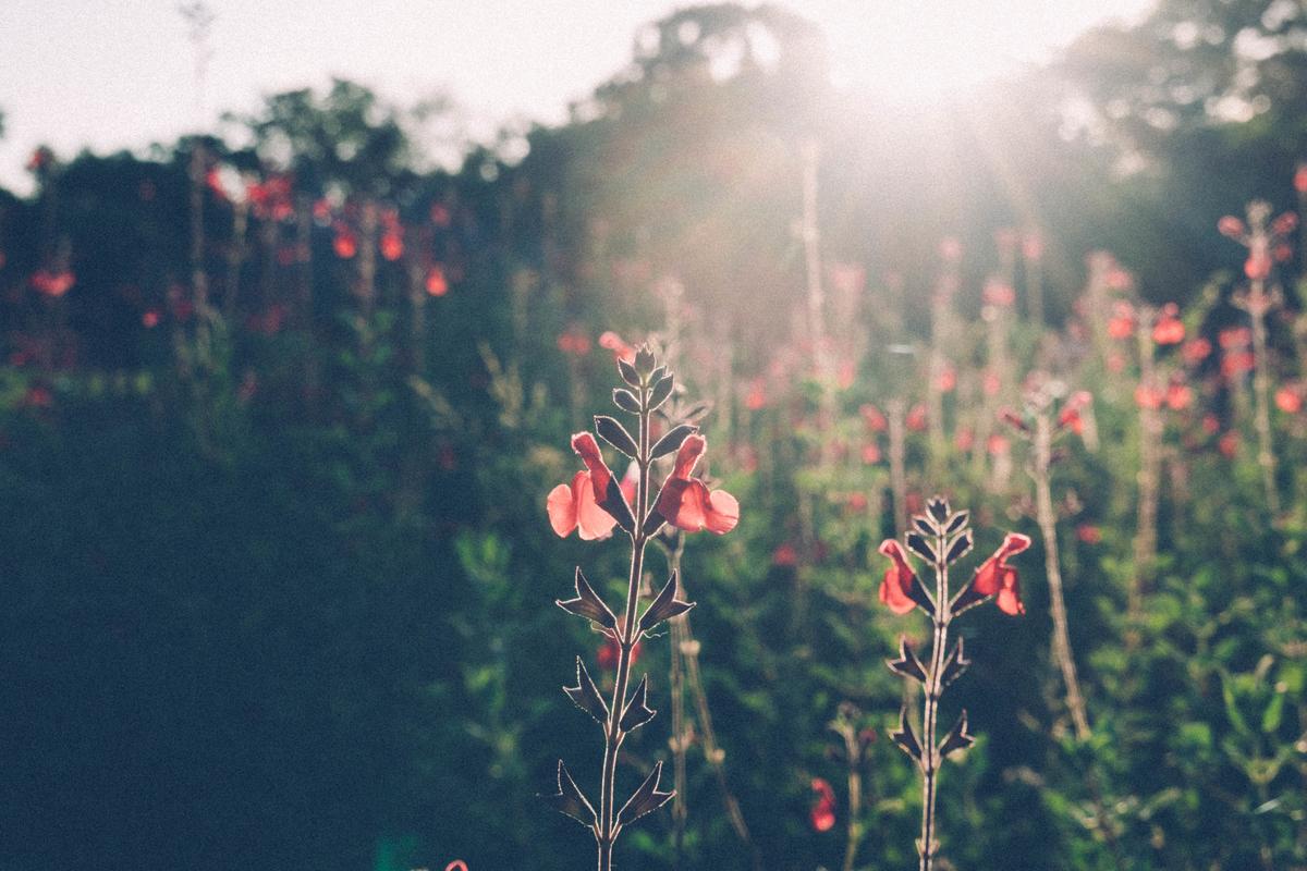 写真:逆光の花