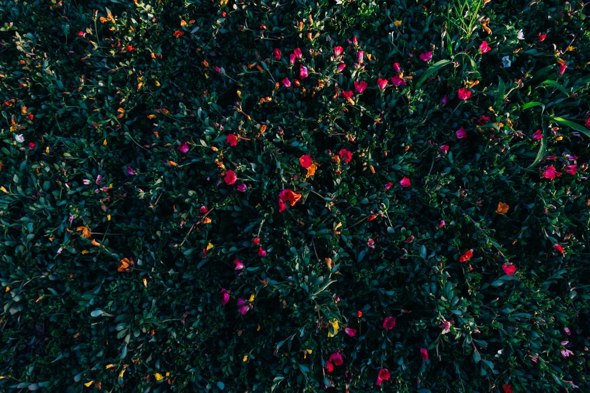 写真:なんかよく分からん花