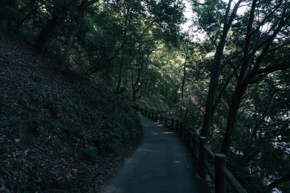写真:嵐山の山の中