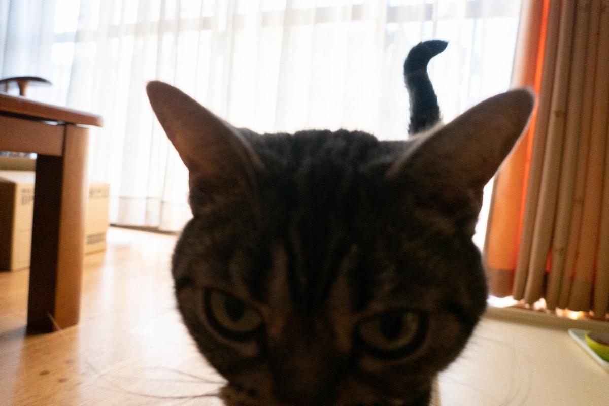 写真:うちの猫