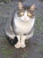 [動物]161216 猫
