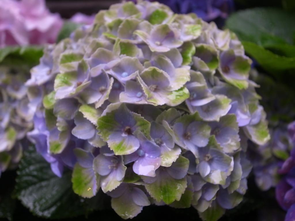 f:id:mistletoe1:20090102023241j:plain